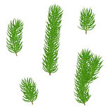 Set fir branches. Set of isolated green fir branches with needles on a white background. Christmas tree. Hand drawn vector illustration Stock Photo