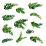 Set of fir branches isolated on white background. Christmas tree vector illustration
