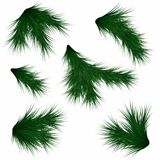 Set of fir branches. Realistic christmas tree branches isolated on white background. Vector Stock Image