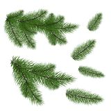 Set: fir branches. Fir tree branches for decoration.. Set of Christmas tree branches for a Christmas decor. Branches close-up. Vector. Drawing. Nature details Stock Images