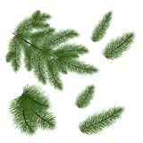 Set: fir branches. Fir tree branches for decoration. Drawing.. Set of Christmas tree branches for a Christmas decor. Branches close-up. Vector. Drawing. Nature Royalty Free Stock Photo