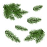 Set: fir branches. Fir tree branches for decoration. Drawing. Ve. Set of Christmas tree branches for a Christmas decor. Branches close-up. Vector. Drawing Stock Photos