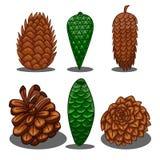 Set of fir cones Stock Photos
