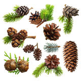 Set of fir evergreen tree branches and cones. Isolated on white. Christmas decoration Stock Photo