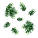 Set:  fir-tree branches for festive design. Close-up. Isolated. Christmas tree branch set. Hand painted Christmas fir branch  isolated on white background Stock Image