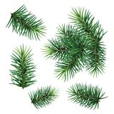 Set:  fir-tree branches for festive design. Close-up. Isolated. Christmas tree branch set. Hand painted Christmas fir branch  isolated on white background Royalty Free Stock Photos