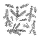Set of fir tree branches isolated on white background.. Realistic sketch style. Christmas, new year symbol. Art vector illustration Royalty Free Stock Photography