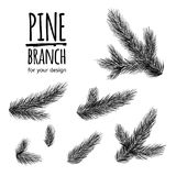 Set from fir tree branches. Template for business card, banner, poster, notebook, invitation. Vector illustration for your design Royalty Free Stock Photos