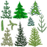 Set of fir trees and fir branches for the Christmas Stock Photo