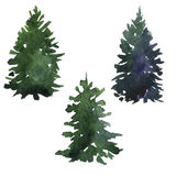 Set of fir trees Royalty Free Stock Photography