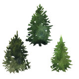 Set of fir trees Stock Photos