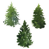 Set of fir trees Stock Image