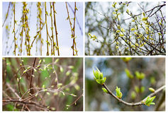 Set of the first spring Royalty Free Stock Photography