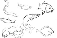 set of fish Royalty Free Stock Images