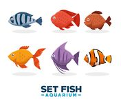 Set fish aquarium icon. Vector illustration design Stock Image