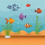 Set fish aquarium icon. Vector illustration design Stock Photos