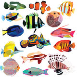 Set of fish Royalty Free Stock Photography