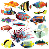 Set of fish Stock Photos