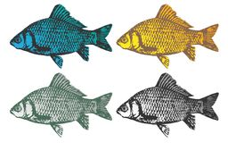 Set of fish in different colors. Vector Royalty Free Stock Photos