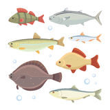 Set fish isolated. river fish vector collection. Set fish river fish vector illustration Royalty Free Stock Photography