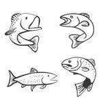 Set of Fish Isolated on White Background Vector. Illustration Stock Photo