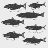 A set of fish from northern rivers. Siberia, Alaska. Silhouette drawing, vector clip art Stock Photography