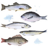 Set of 5 fish painted in watercolor Royalty Free Stock Photography