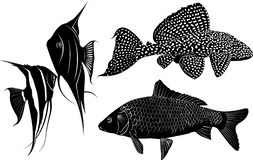 Set of fish silhouettes. Vector silhouette vector illustration