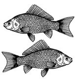 Set fish, underwater world. Aquatic science - the science that studies the structure of the fish. A detailed sketch of the fish Royalty Free Stock Images