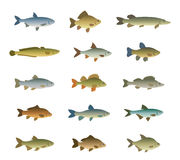 Set of fish. On a white background Stock Images