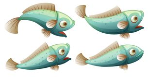 A set of fish on whitr background Vector Illustration