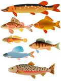 Set of fishes. Vector colored set of fishes Stock Photos