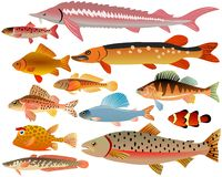 Set of fishes. Vector colored set of fishes Royalty Free Stock Images