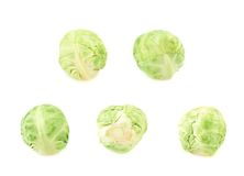 Set of five brussels sprouts Stock Images