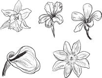 Set of five flowers sketches isolated on white Royalty Free Stock Photo