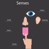 Set of five human senses. Icons of human senses. Infographics about human senses. Stock Photos