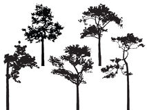 Set of five pine tree silhouette vector Royalty Free Stock Images