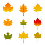 Set of five red and yellow maple leaves isolated on white Stock Photography