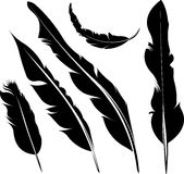 Set of five silhouette of feathers Royalty Free Stock Image