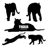 Set of five tiger silhouettes Stock Images