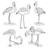 Set of flamingo images Royalty Free Stock Photos