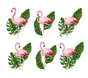 Free Set Flamingos Animal With Tropical Leaves Royalty Free Stock Photos - 141631298