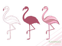 A set of flamingos. Silhouette of flamingos. A tropical bird. Vector. Logo. Stock Image