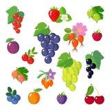 Set of flat berries. Royalty Free Stock Photo