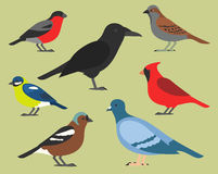 Set of flat birds, isolated on background. different tropical and domestic birds, cartoon style simple birds for logos. Stock Image
