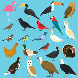 Set of flat birds, isolated on background. different tropical and domestic birds, cartoon style simple birds for logos. vector illustration
