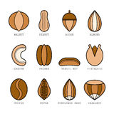 Set of flat colored icons with different nuts, vector illustration Royalty Free Stock Image