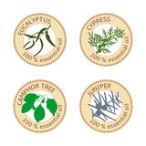 Set of flat essential oil labels. 100 percent. Eucalyptus, cypress, camphor tree, juniper Royalty Free Stock Photography