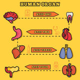 Set flat human organs icons illustration concept. Royalty Free Stock Photography