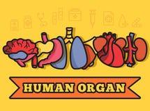 Set flat human organs icons illustration concept. Royalty Free Stock Images